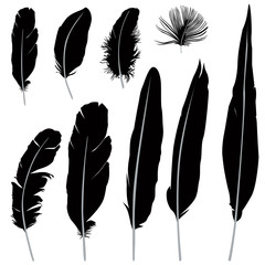 Feather set isolated over white background