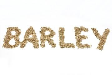 BARLEY geschrieben mit Gerstenkörnern auf weißem Hintergrund
