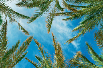 palm leaves against the sky in summer