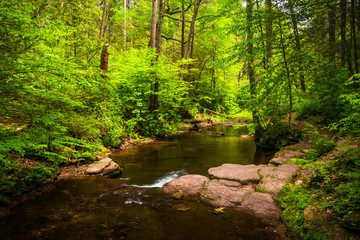 A stream in a lush forest at Ricketts Glen State Park, Pennsylva
