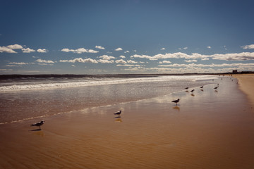 Seagulls on the beach in Old Orchard Beach, Maine.