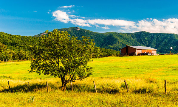 Barn, tree and view of the Appalachians in the Shenandoah Valley