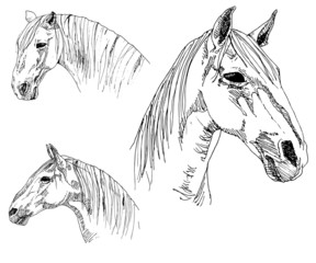 Set of hand drawn horses head.