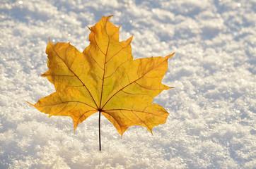 Кленовый лист на снегу.