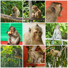 Collage of cute Monkeys with a nine photos