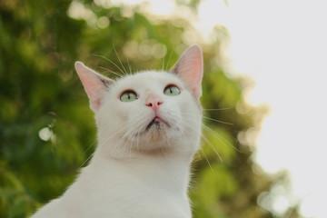 gatito mirando hacia arriba