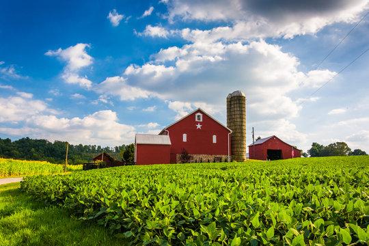 Beautiful farm field and barn on a farm near Spring Grove, Penns