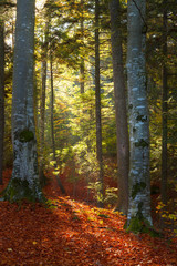 Beautiful light in the forest in an autumn day