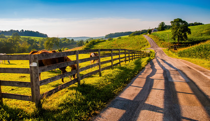 Fence and horses along a country backroad in rural York County,