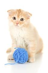 Cute little Scottish fold kitten with skein of thread, isolated