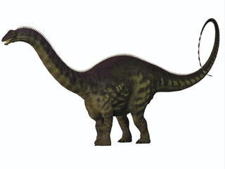 Apatosaurus on White