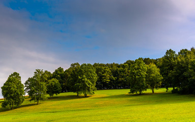 Trees on a hill in rural York County, Pennsylvania.