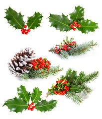 Set of   Holly leaves and berries with a pine branch on a white
