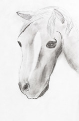 child's drawing - horse head