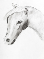 horse head by black pencil