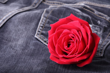 red rose flower on black jeans denim texture
