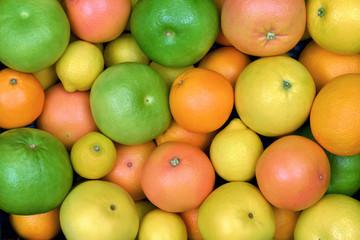 Wall Mural - Owoce cytrusowe