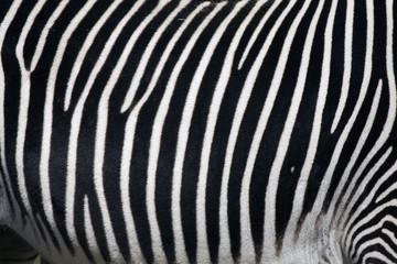 Fotobehang Zebra Pattern zebra print