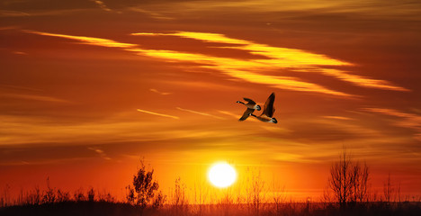 Foto op Textielframe Helicopter Улетают гуси в тёплые края.....