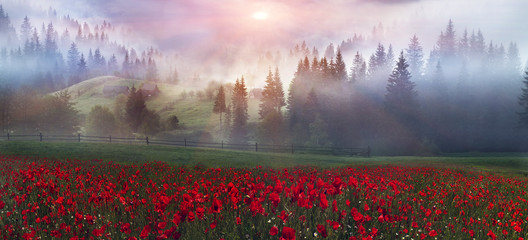 Wall Mural - alpine poppies in the Carpathians
