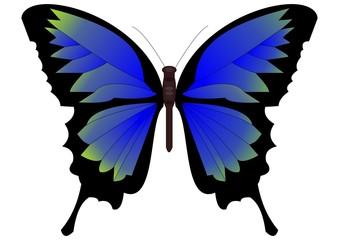 Single butterfly in blue-green design
