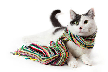 Black and white cat in a multicolored striped scarf