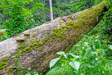 Moss growing on tree in rain forest, Thailand