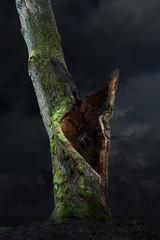 old oak tree on moody sky