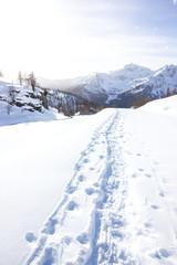 Wall Mural - Orme e impronte su neve