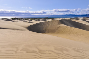 Oceano Dunes Natural Preserve, California (USA)