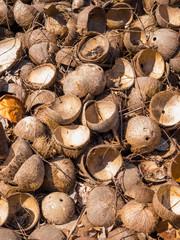 Coconuts at the coconut farm