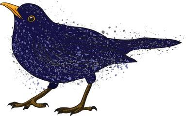 blue catbird