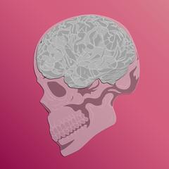 Human Brain & Skull graphic