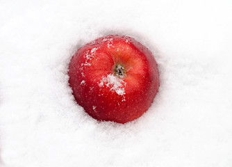 apple red on snow