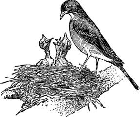Vintage picture birds nest