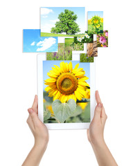 Tablet PC in hands and images of nature objects isolated