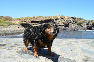 Wet Black Dog