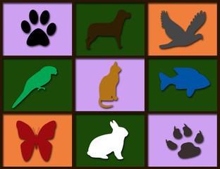Animal kingdom didactic image framed