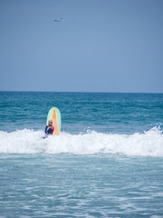Beautiful young woman surfing in Kuta