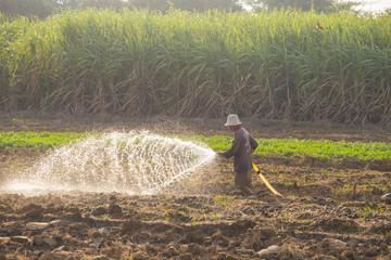 Farmer watering vegetable