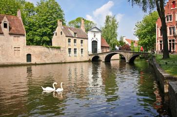 Swans on the river in Bruges