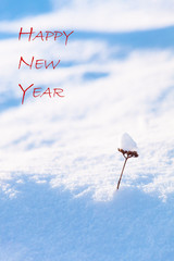 Happy New Year Wish and Small Snowy Plant