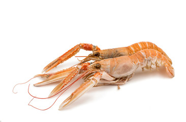 shrimp with pincers isolated
