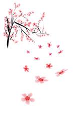 Beautiful asian sakura