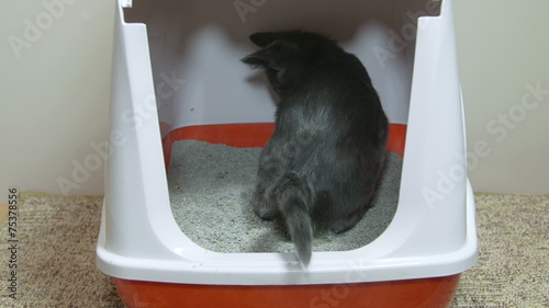 how to train cat to use hooded litter box