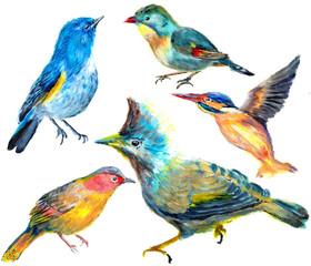 hand draw bird