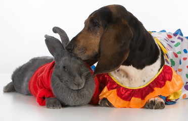 bunny and basset hound