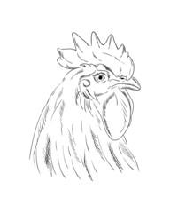 A cock head