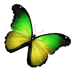 Green yellow butterfly on white background