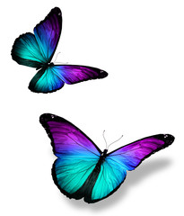 Two color butterflies on white